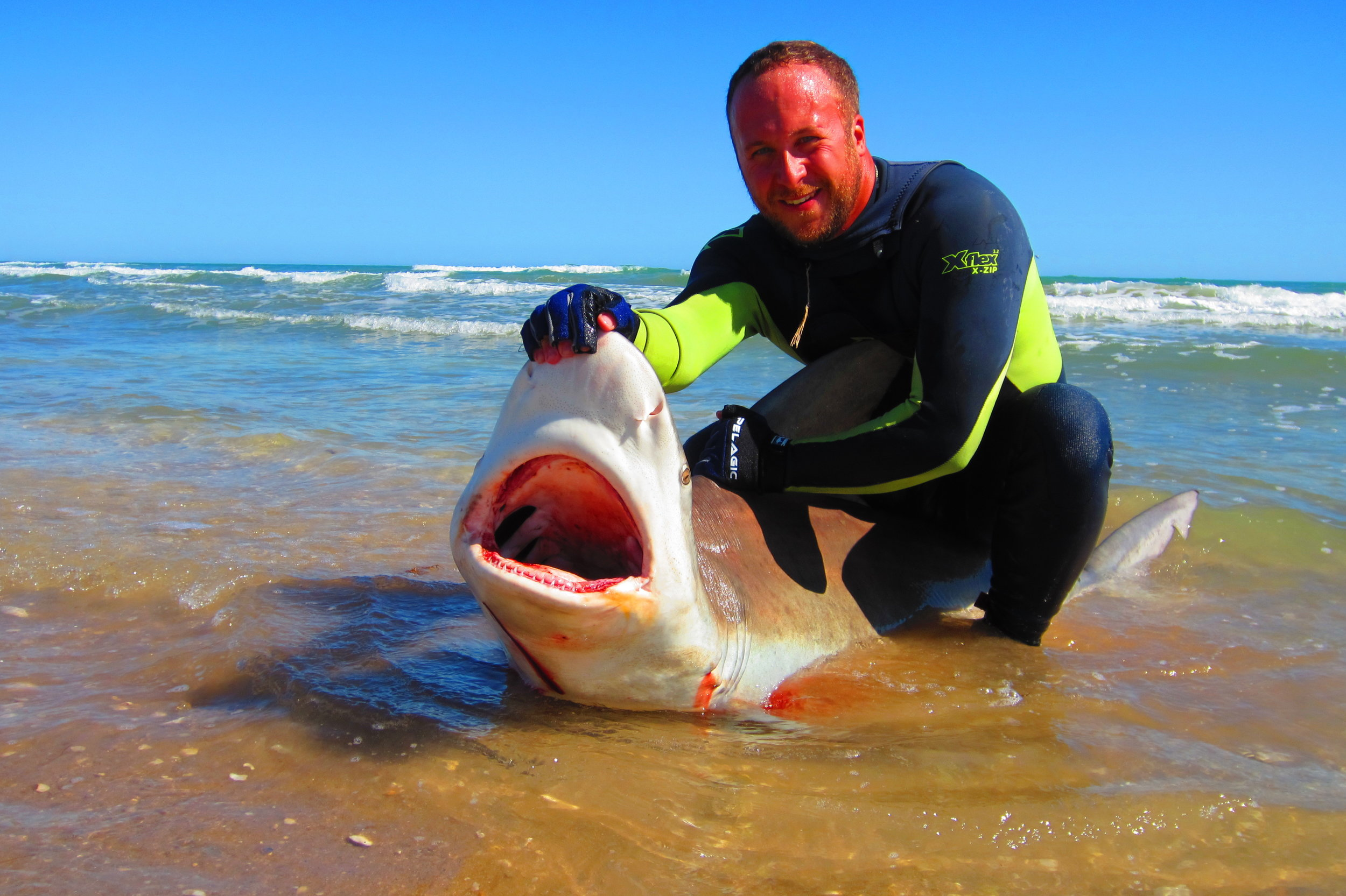 7 ft Sandbar Shark caught in winter