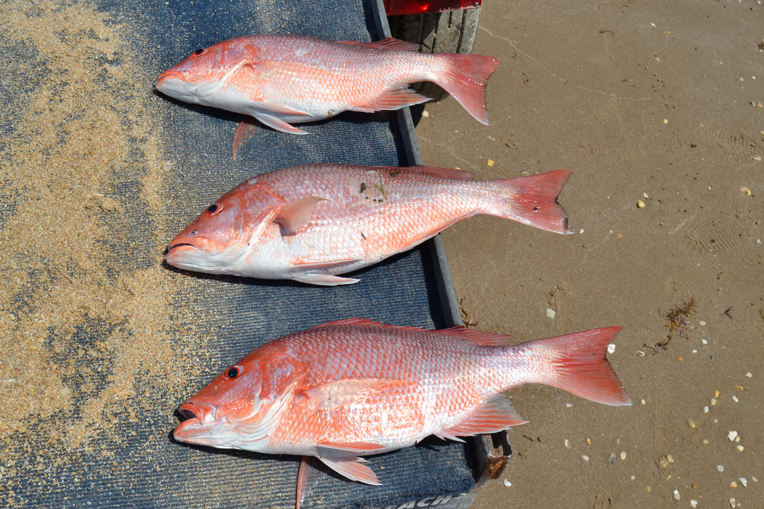 Beach Red Snapper