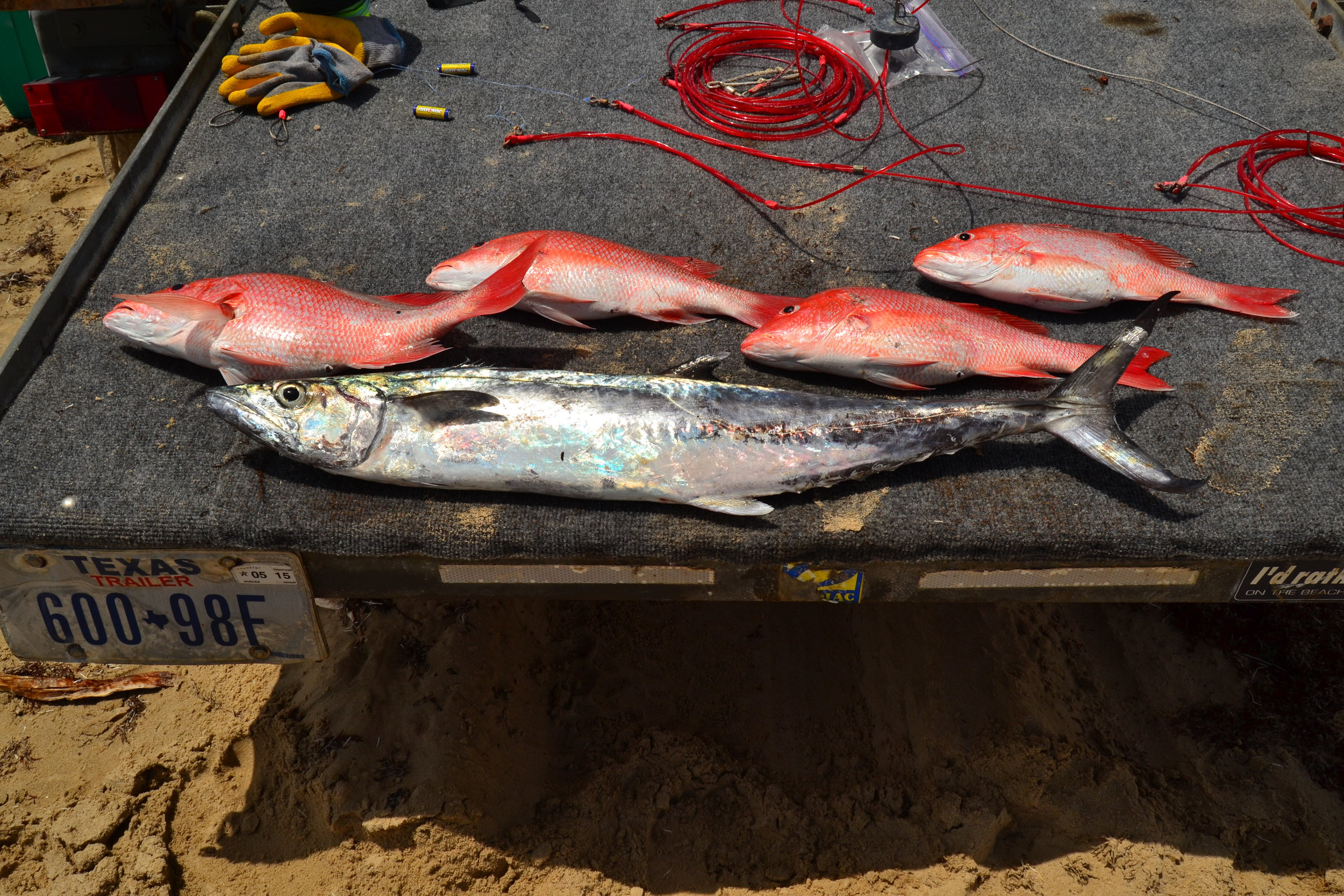 King Mackerel and limit of red snapper