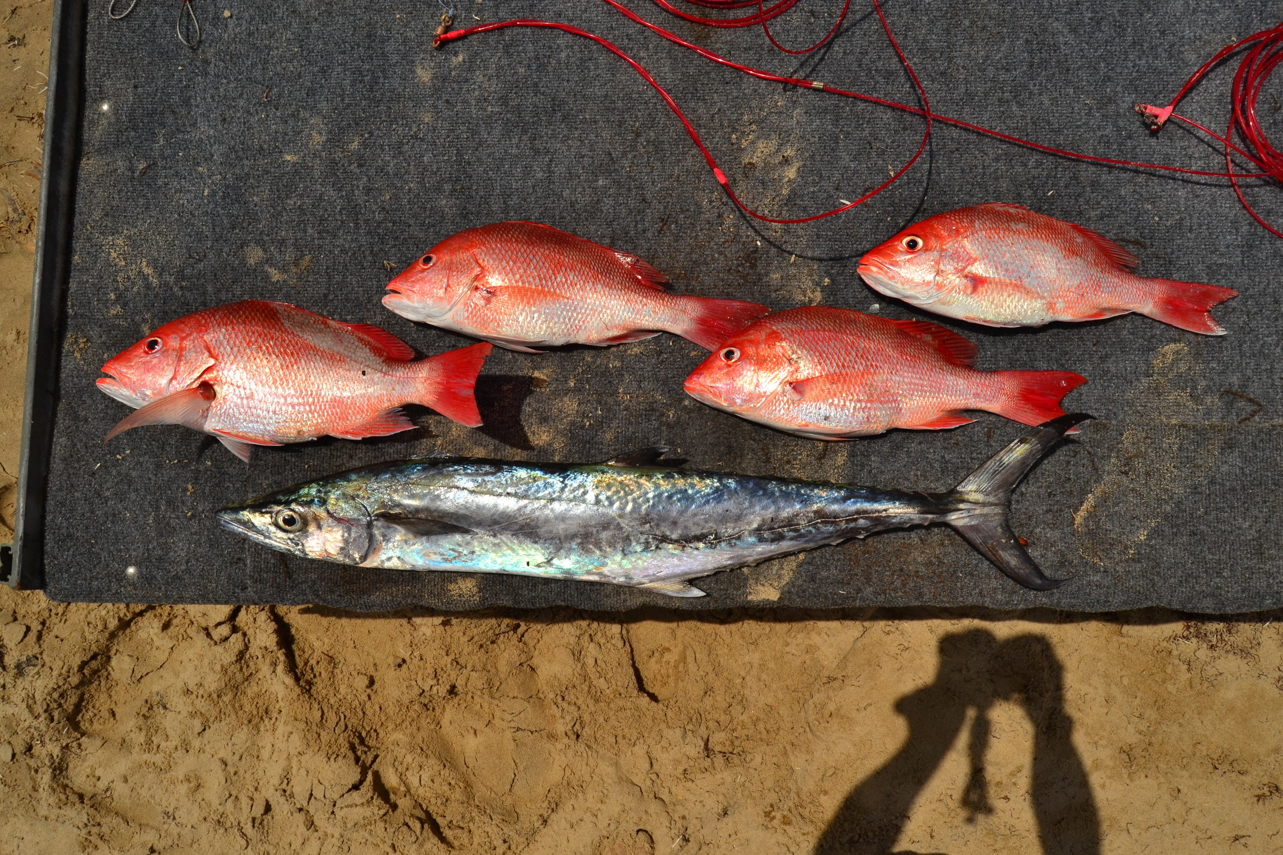 Limit of Red snapper and one King Mackerel from topwater