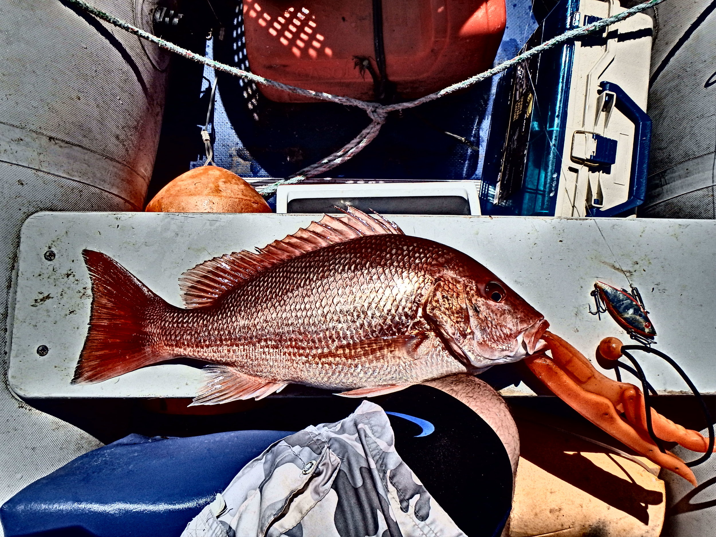 Rattletrap lure fishing for Red Snapper
