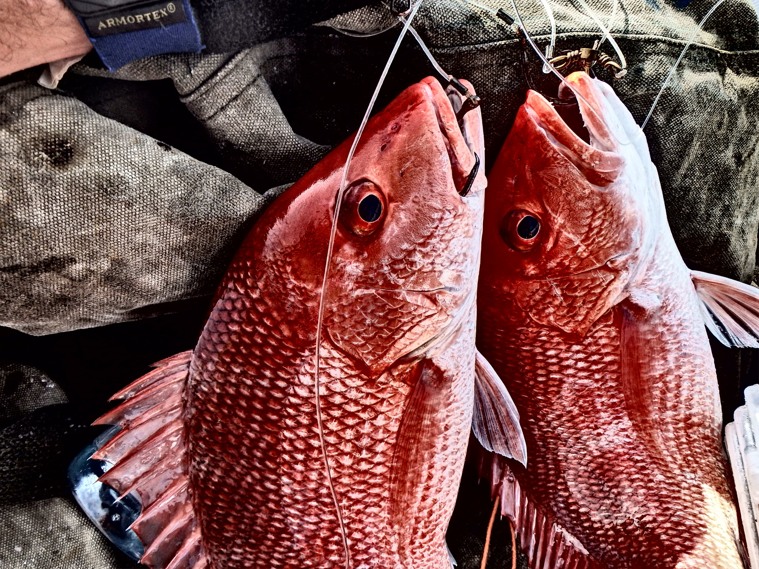 Typical double red snapper hookup