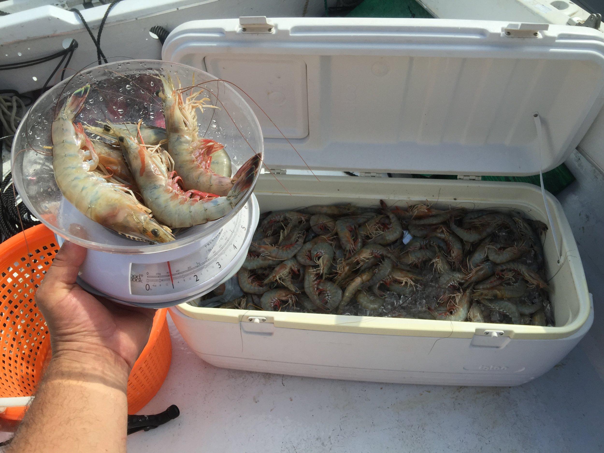 5 to the pound beach white shrimp
