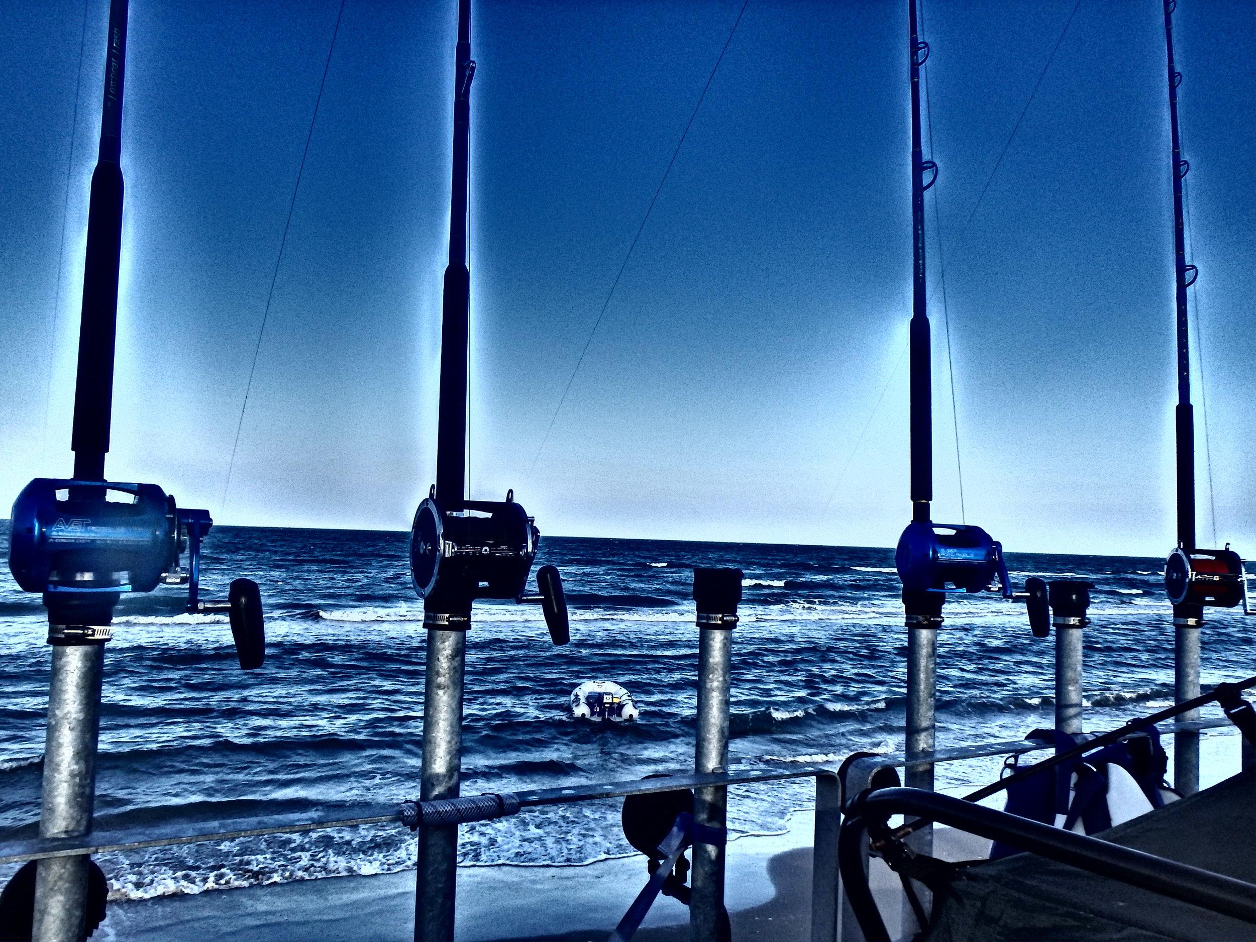 Shark fishingin late summer