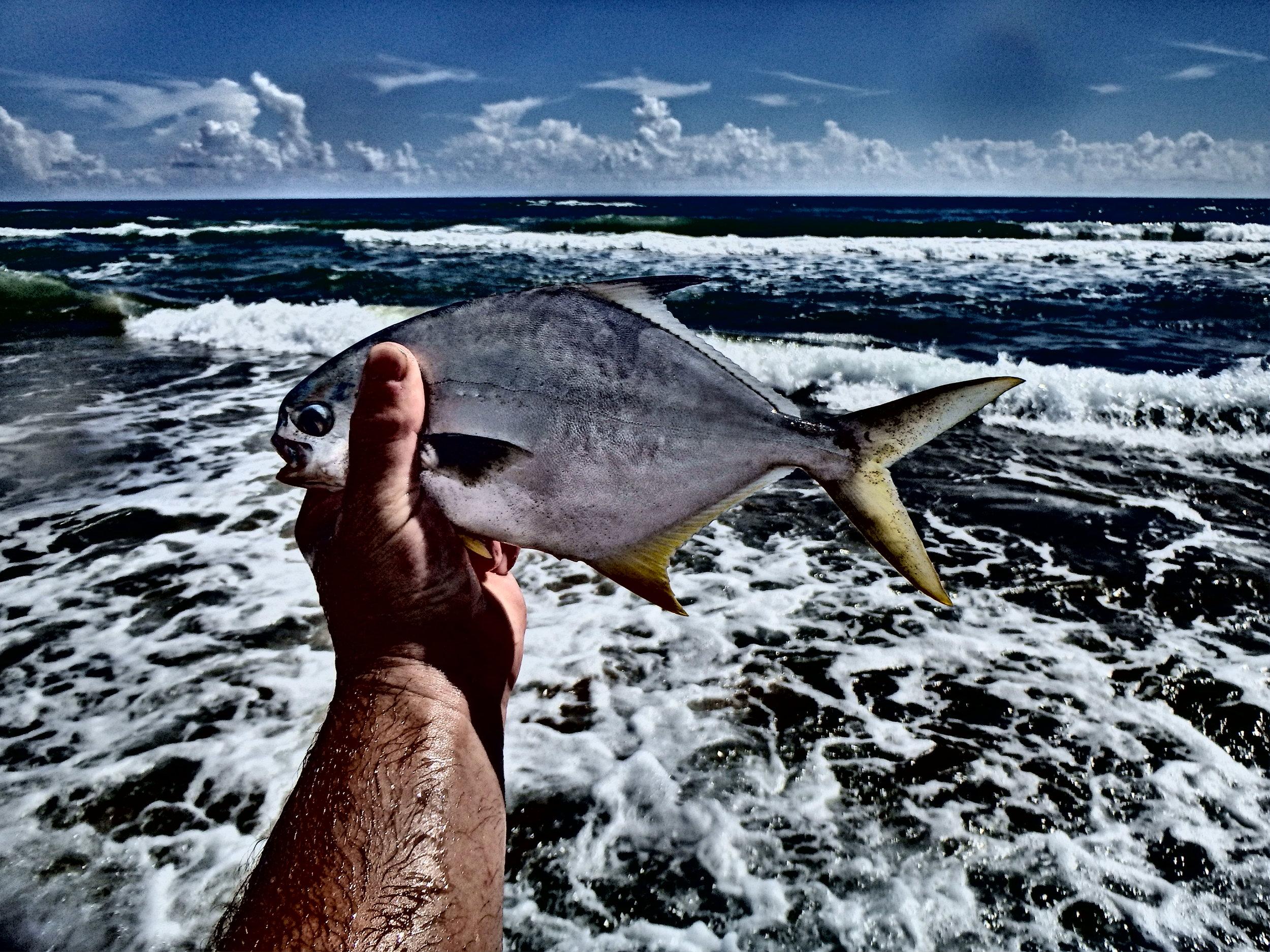 Pompano, best tablefish on the  beach!