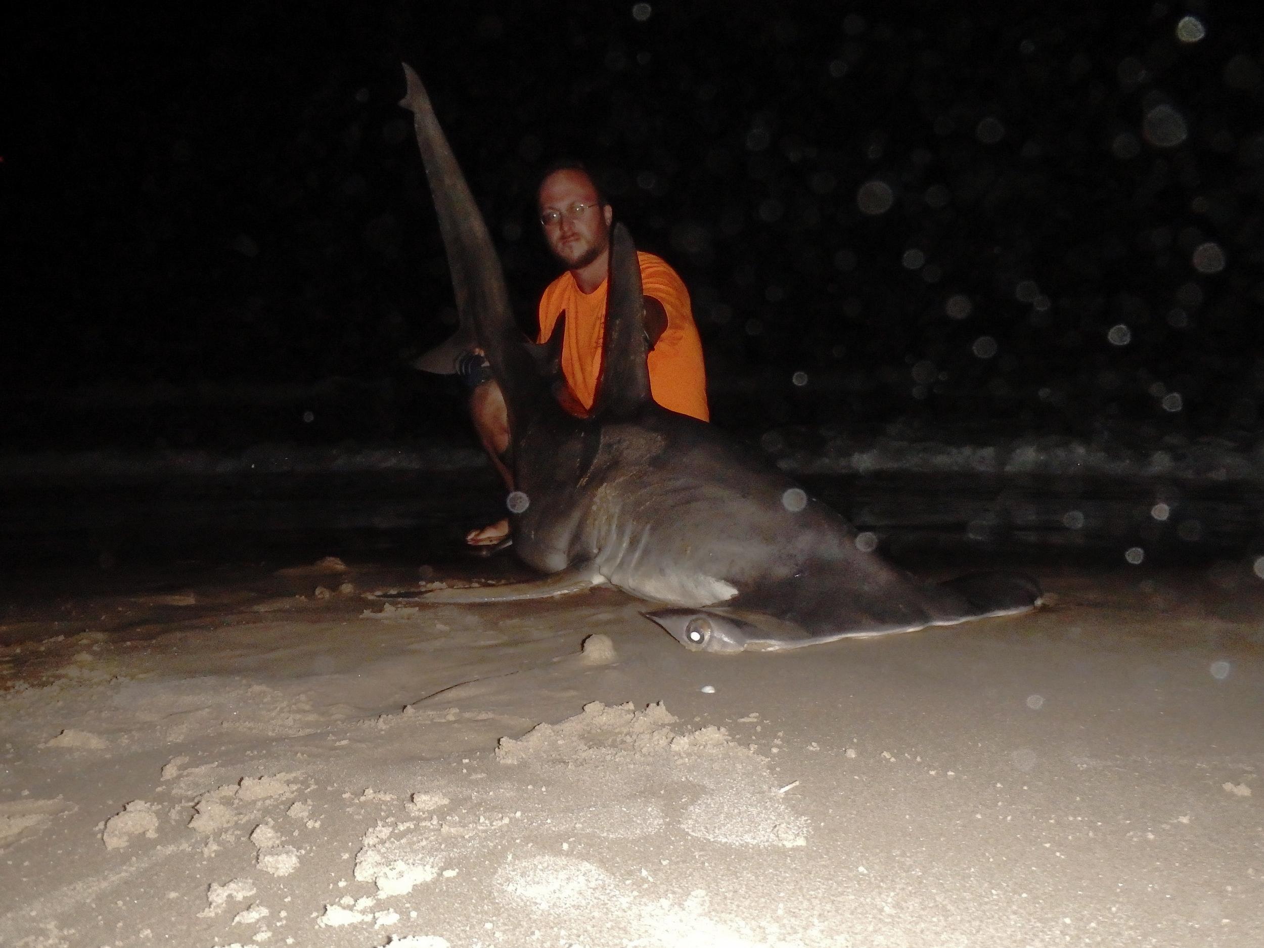 2am Greater Hammerhead Shark