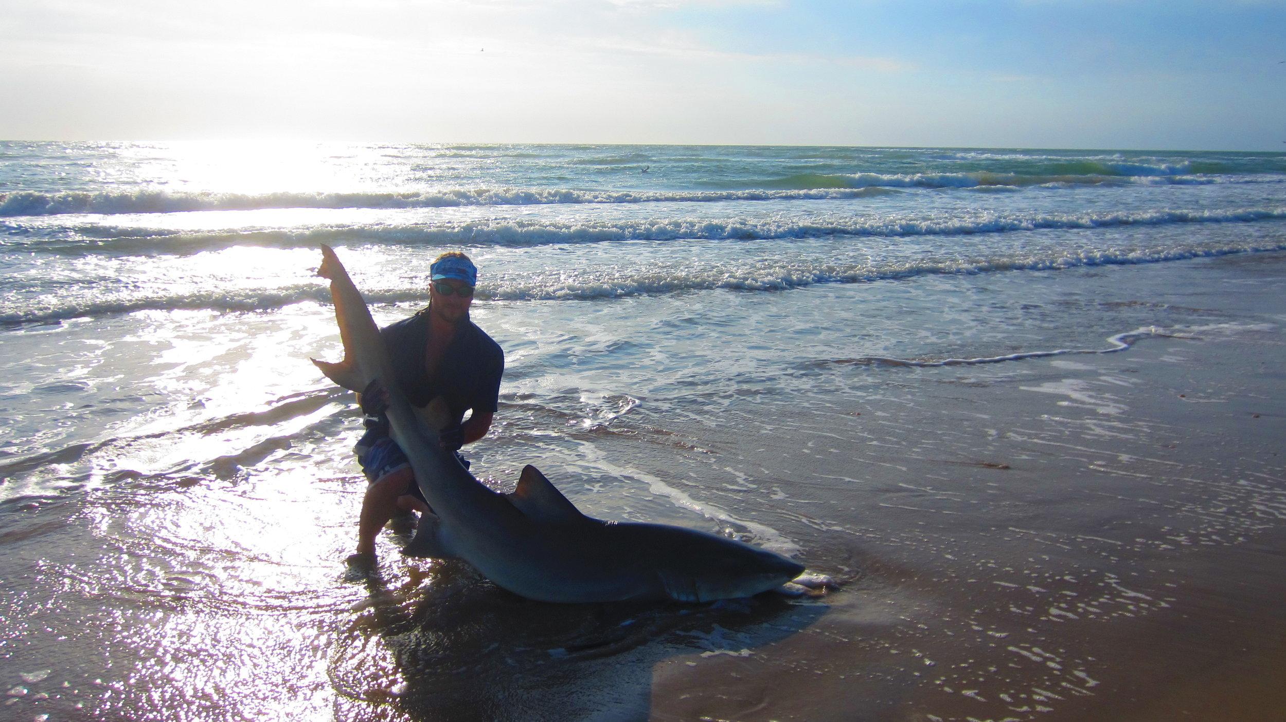 9 ft Lemon Shark