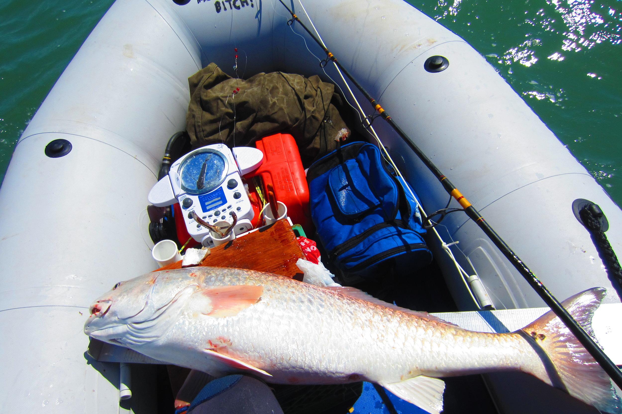 Bull redfish 3.5 miles off the beach