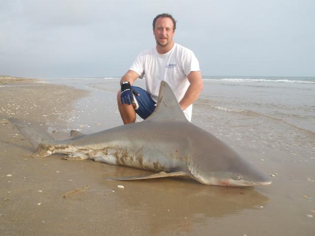 2010 winter Sandbar Shark