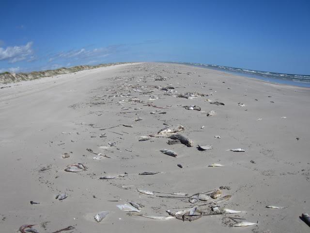 Red Tides can be devastating
