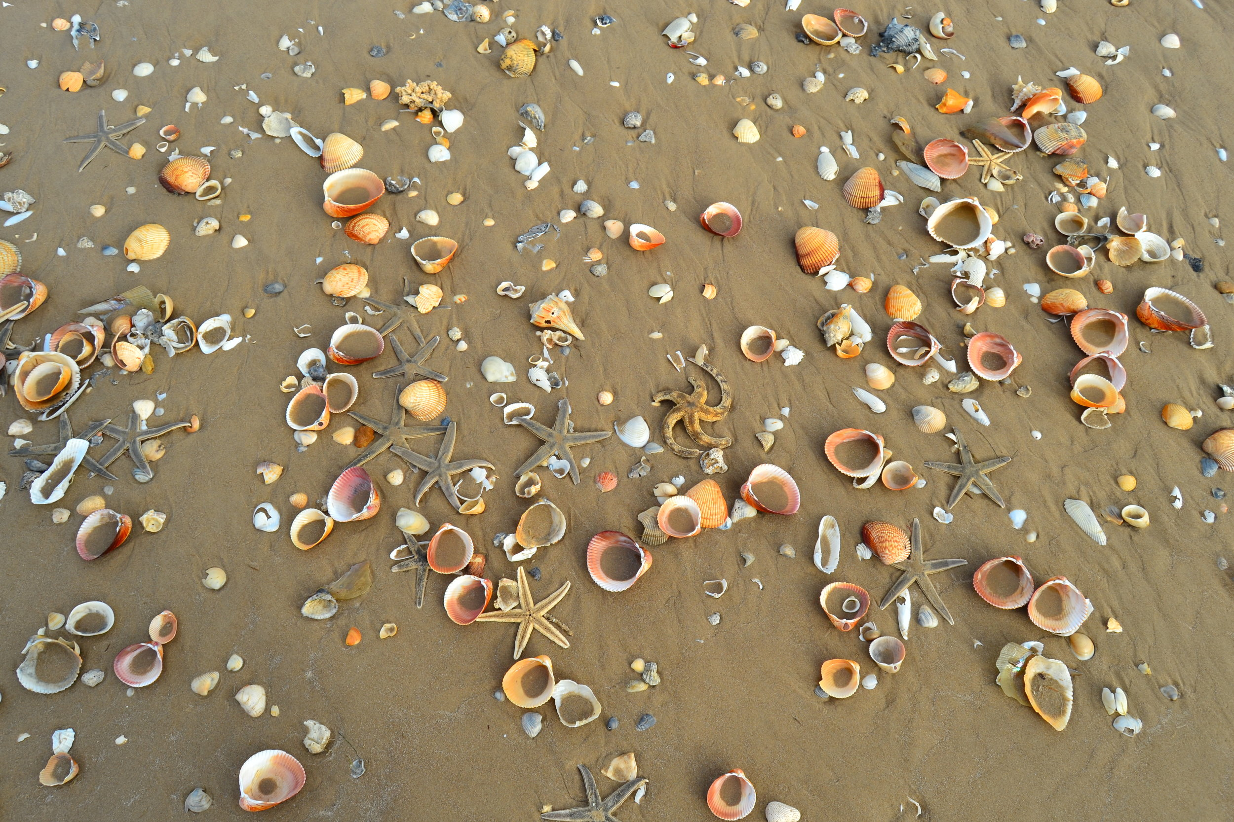 Guided Tours for Shelling - Shelling can be very productive in the winter months, and year round, if one knows where to look!