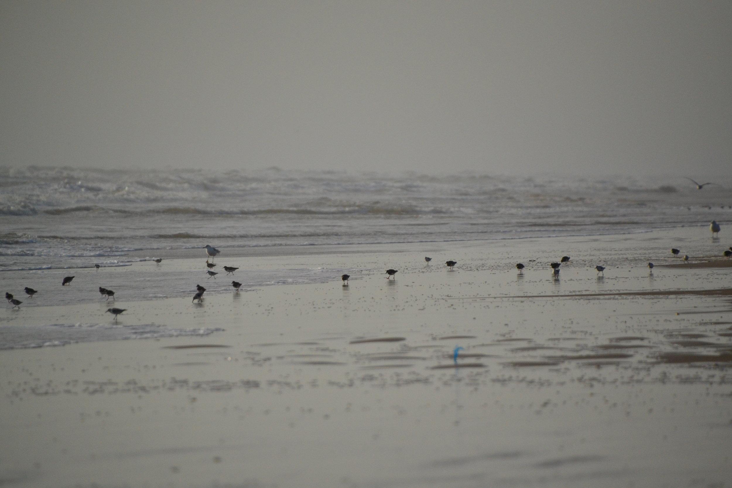 Winter's morning, shorebirds.