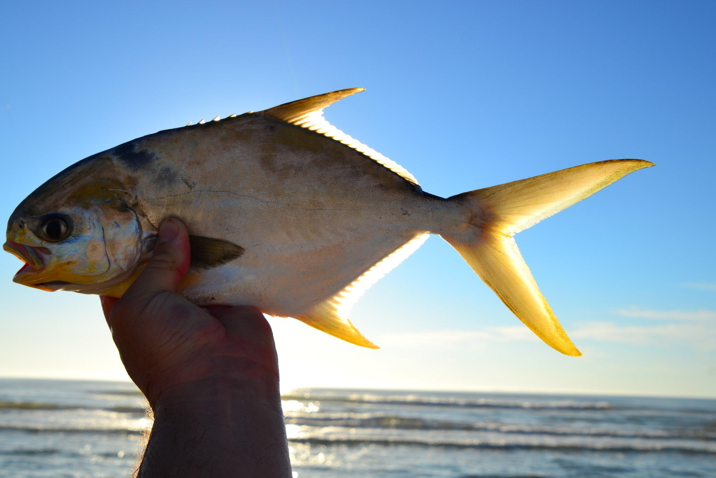 Light SE winds, trout green water, Pompano. - Padre Island National Seashore