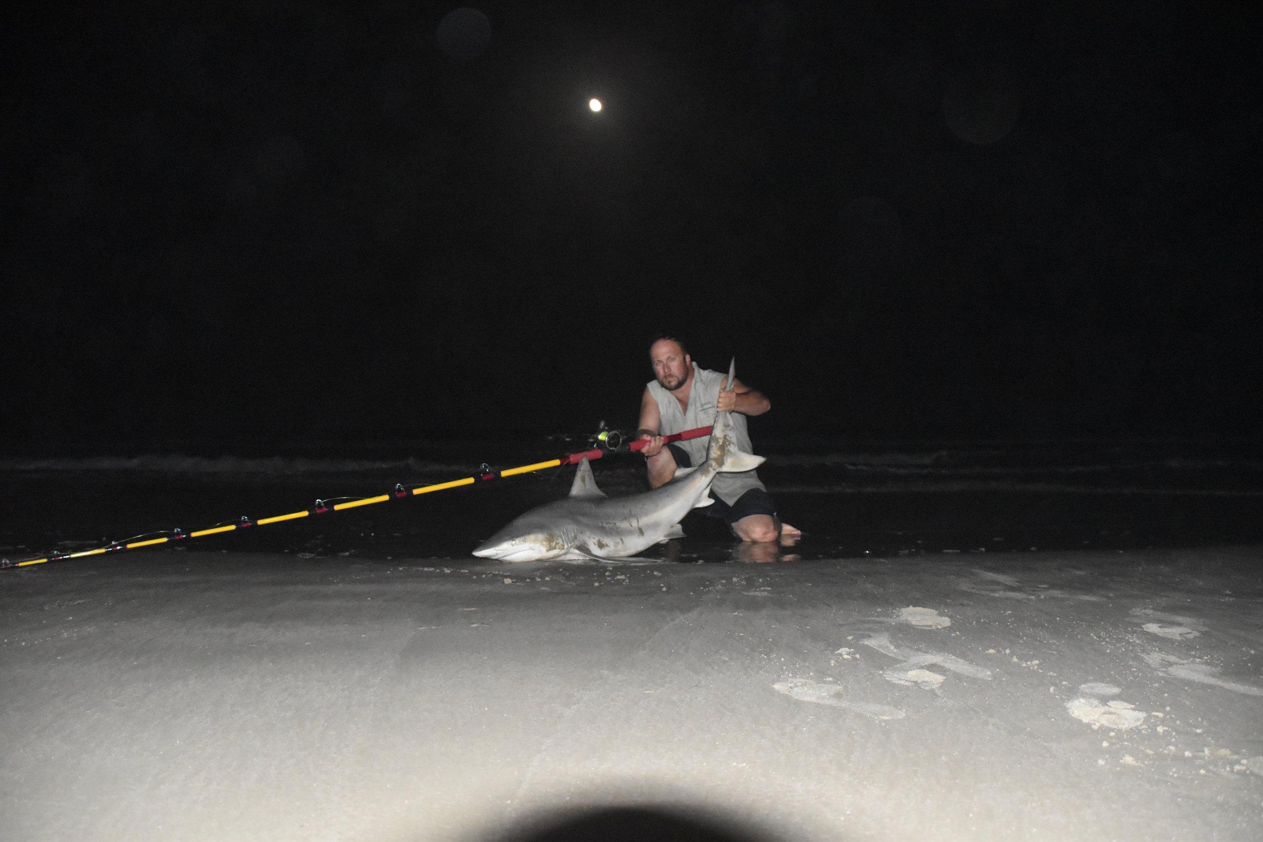 Almost 6 ft casted bait blacktip shark.