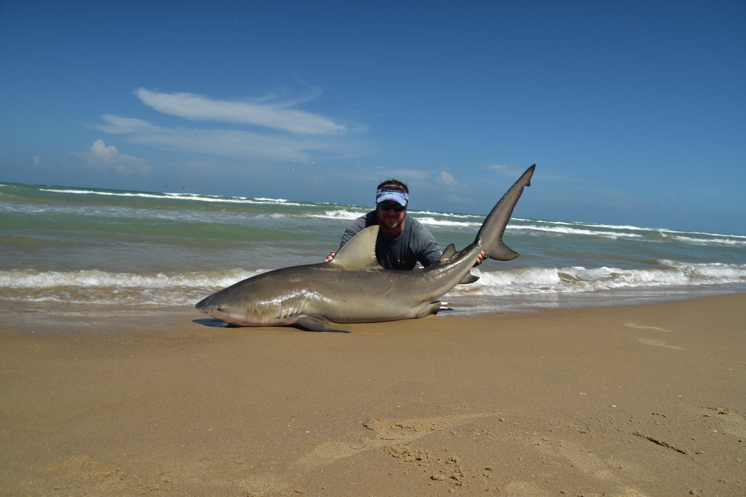 7' Bull Shark, August
