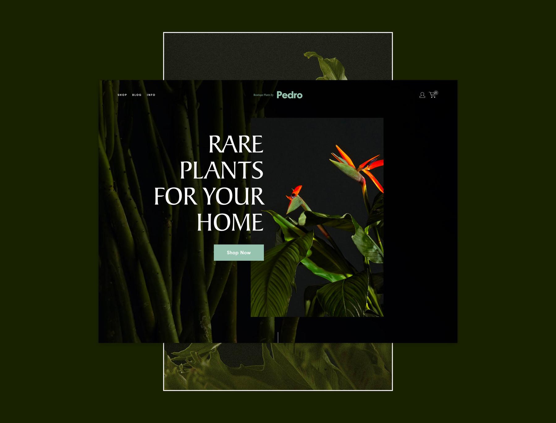 Pedro - Photo art direction / web / branding