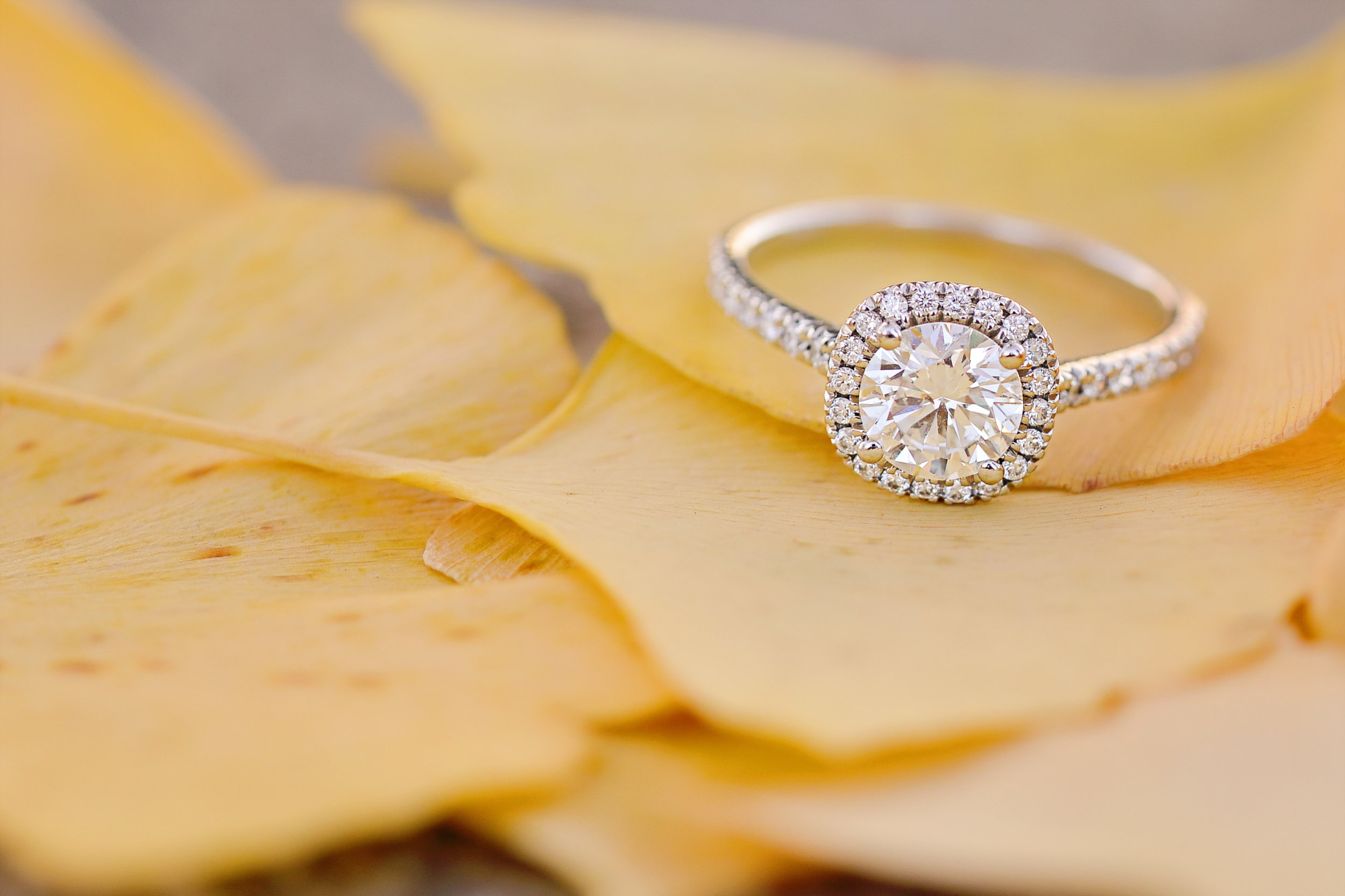 diamond engagement ring on yellow leaves in houston texas photo.jpeg