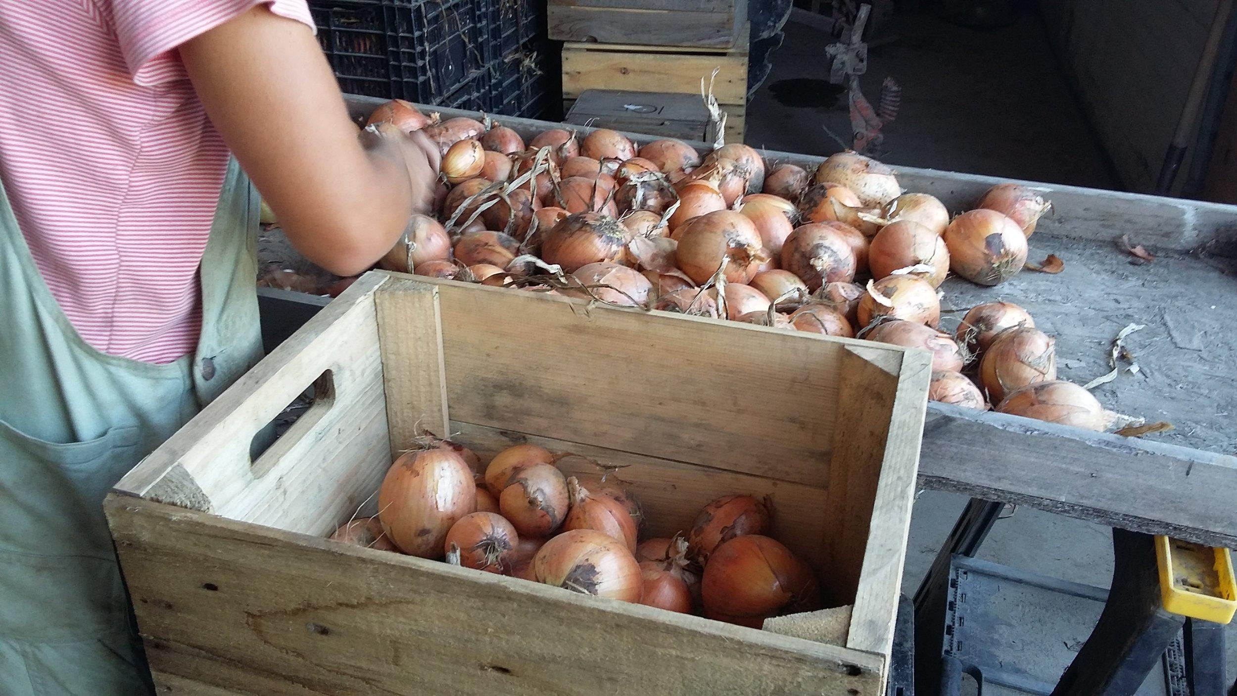 2018-08-20 onion topping 4.jpg