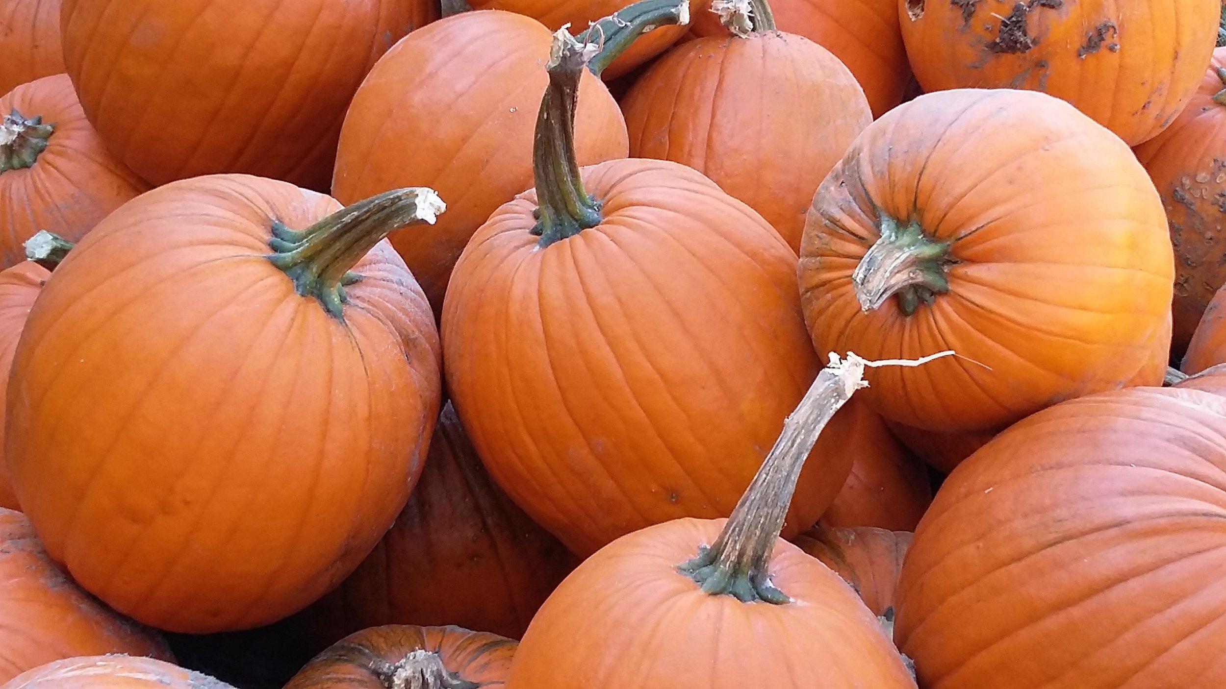 2017-10-18 pumpkins.jpg