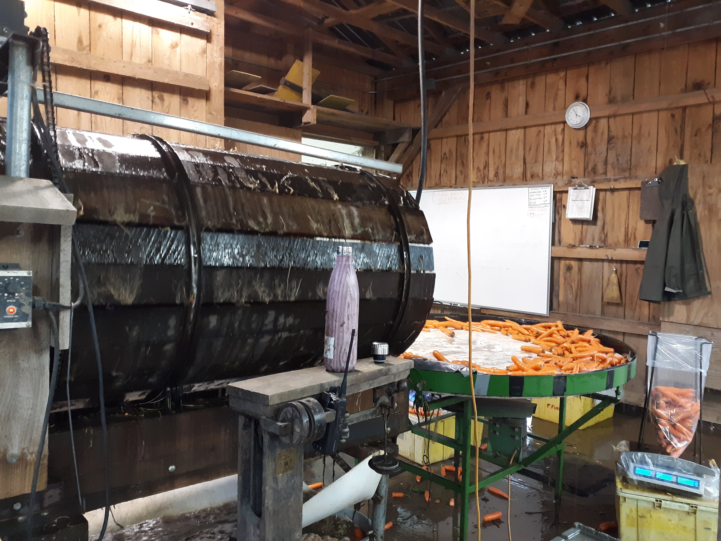 Carrots are cleaned in the roots washer.