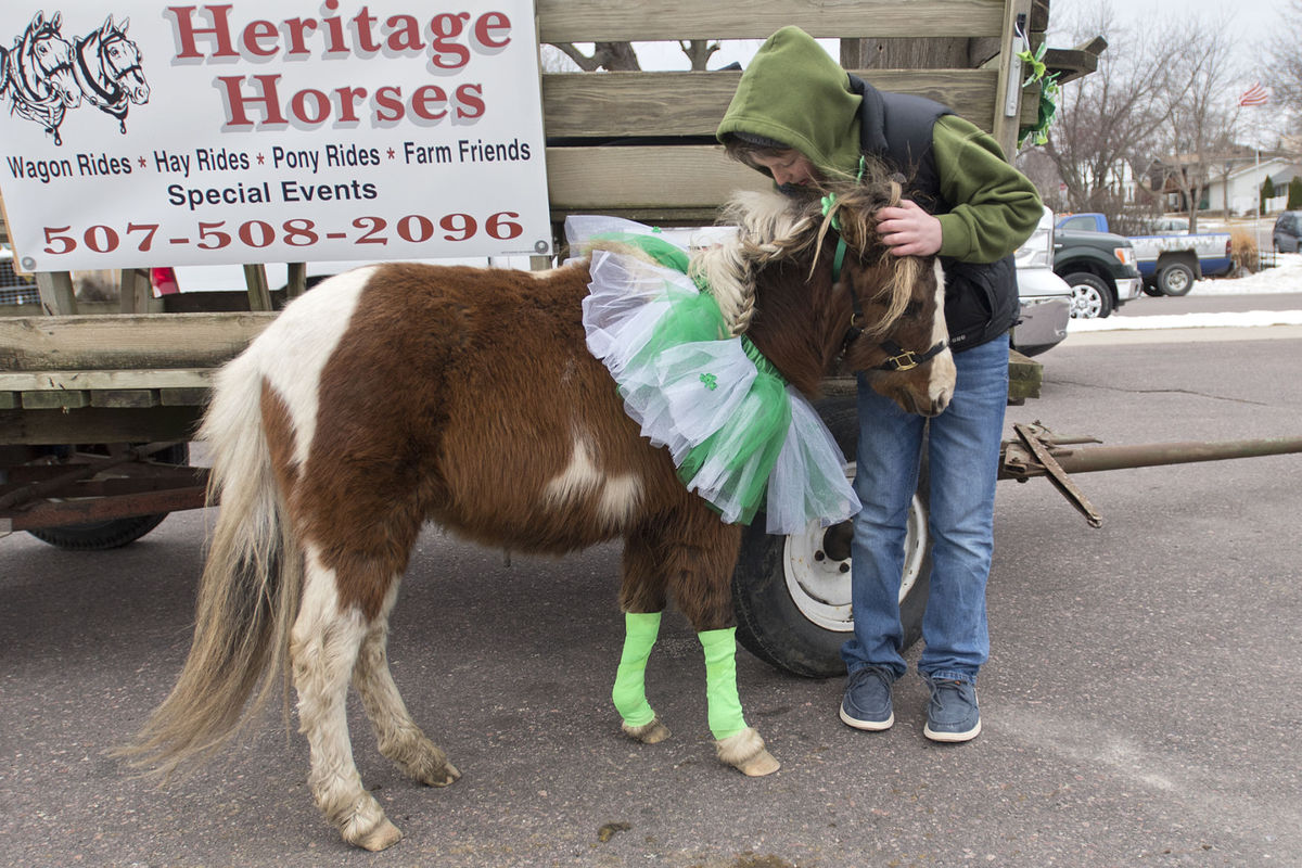 St. Patty's Day Parade in New Ulm - Irish for a Day: New Ulm hosts 52nd St. Patrick's Day ParadeBy Trey Mewes tmewes@mankatofreepress.comMar 17, 2017Colton Benson, 11, pets the family's miniature horse Toby before the start of the St. Patrick's Day parade in New Ulm. This was the first year the Benson family participated in the parade with their horses. Photo by Jackson FordererJackson FordererBrayden Trapp, 8,wears an Irish flag mustache as he watches the St. Patrick's Day parade along Minnesota Street in New Ulm. Brayden's mother Tiffany Trapp said they traveled from Springfield to see the parade. Photo by Jackson FordererJackson FordererAnne Dempsey (center) leads her group down Minnesota Street during the St. Patrick's Day parade in New Ulm. This is the 52nd year for the parade. Anne's relative Terry Dempsey was one of the founders of the annual march. Photo by Jackson FordererJackson FordererNEW ULM — There were a few less