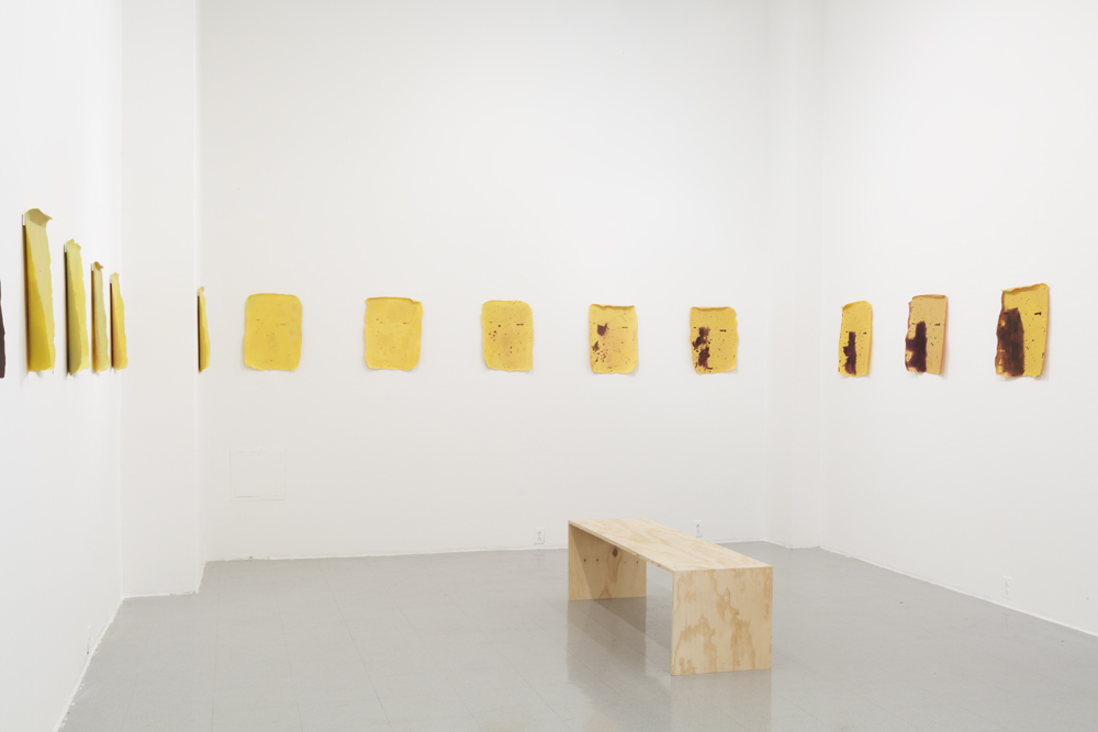 Turning (Install View)  2017  Acrylic on acetate  14 x 20 in each  This body of work is an installation of twenty-eight paintings - each painting is a recording of a day in the ripening of a banana.  Image by Shark Senesac