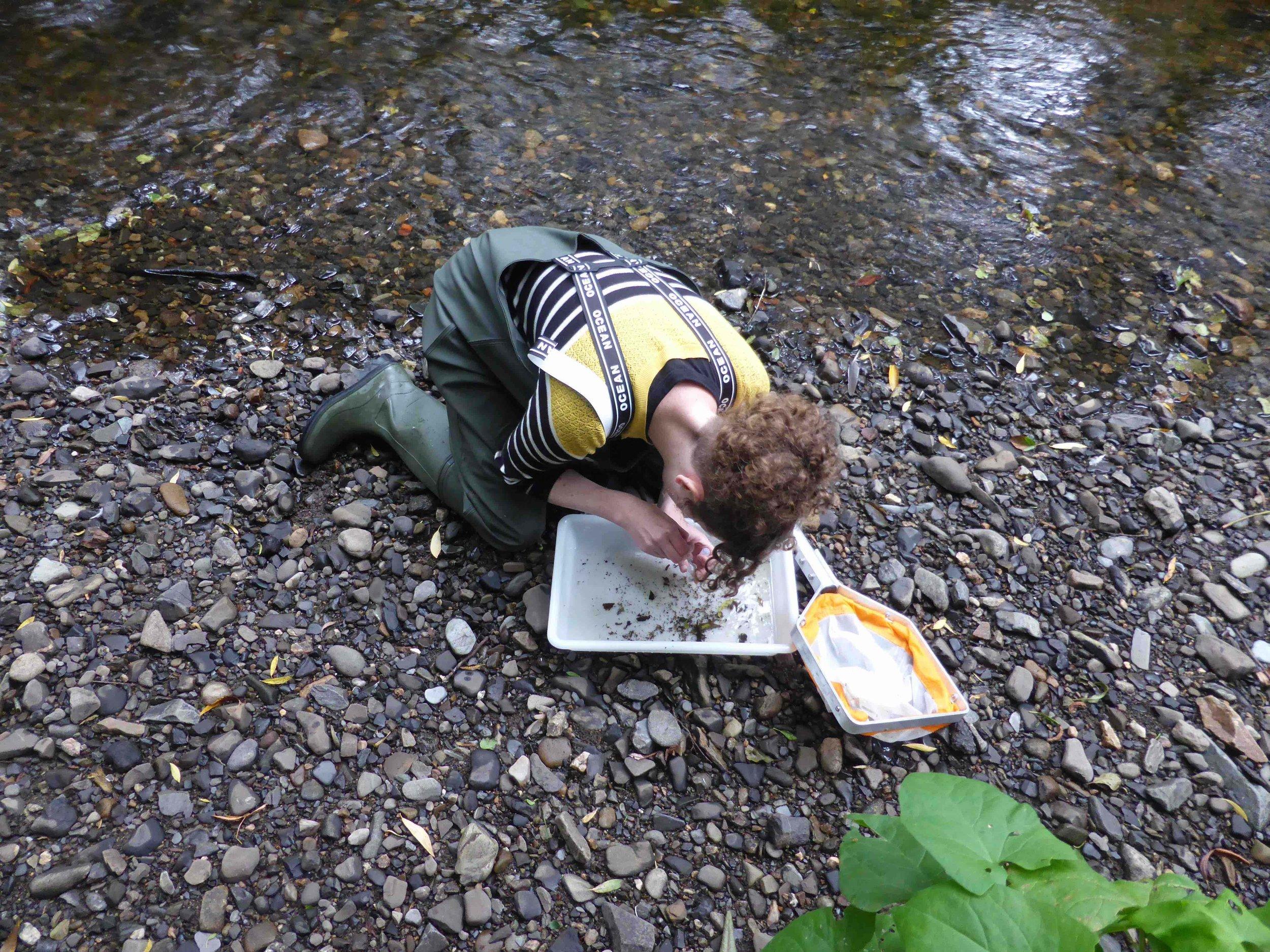 Surveying water beetles at Dodder Wet Woodland pNHA