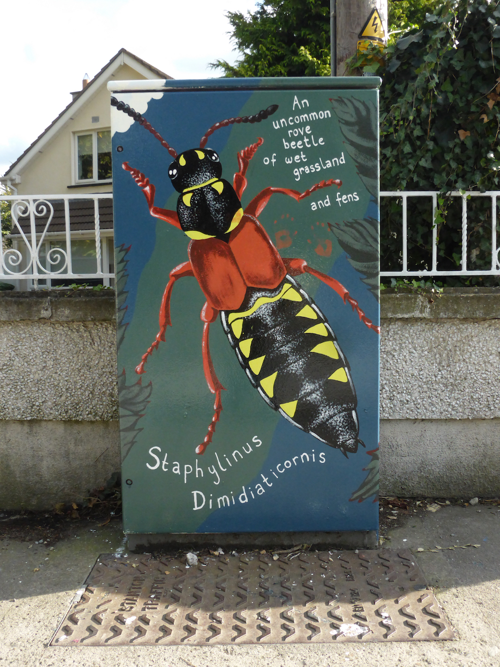 Rove Beetle  for  DublinCanvas.com , 2017. On the corner of Terenure Rd. West and Greenlea Road, Dublin 6.