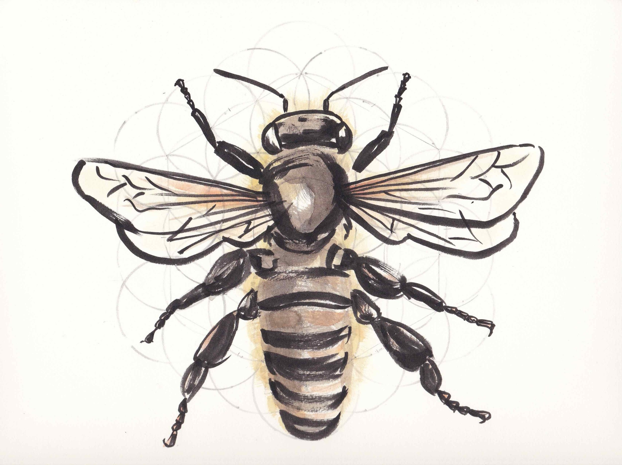 Queen Bee and the Sacred Art of Geometry  (indian ink, watercolour and pencil), 2017.  BUGONIA  exhibition, Bí URBAN, Dublin.