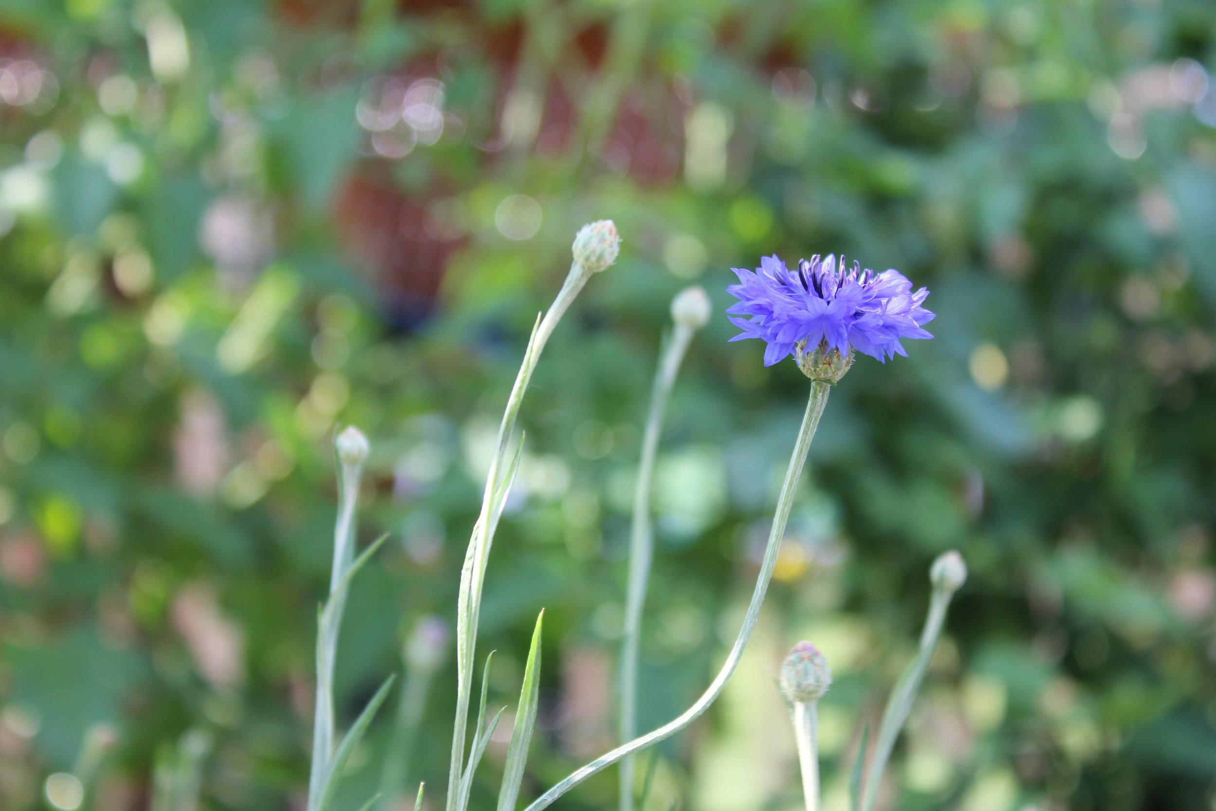 GoApe_Garden_12.JPG