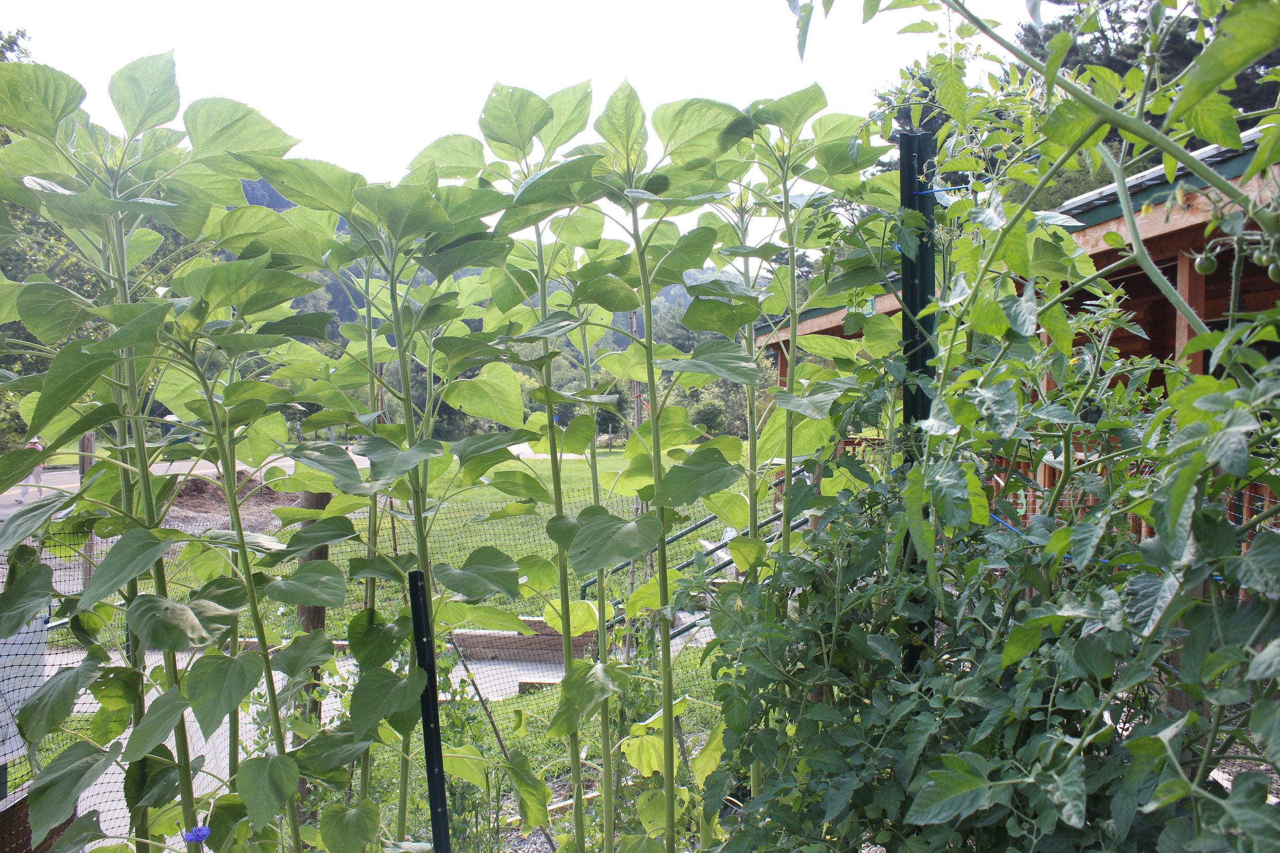 GoApe_Garden_24.JPG