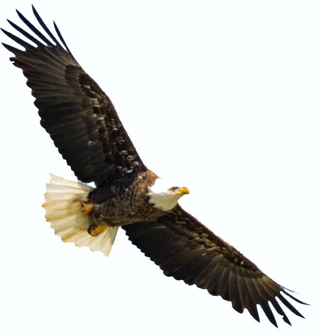 Hiking and Eagle Scouting (literally!): Takea hike and see if you can catcha glimpse of the north park eagles out and about or in their nest with our binoculars and high powered telescopes! -