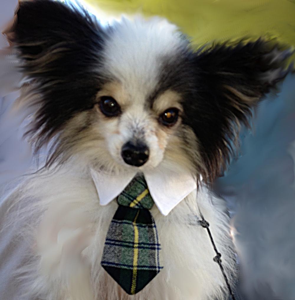 tie-waiting-orig-smudged.jpg