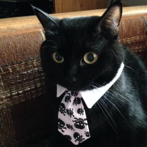 Skulls Necktie.png