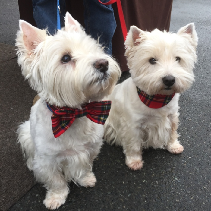 Tartan Bow Tie and Party Collar resized.png