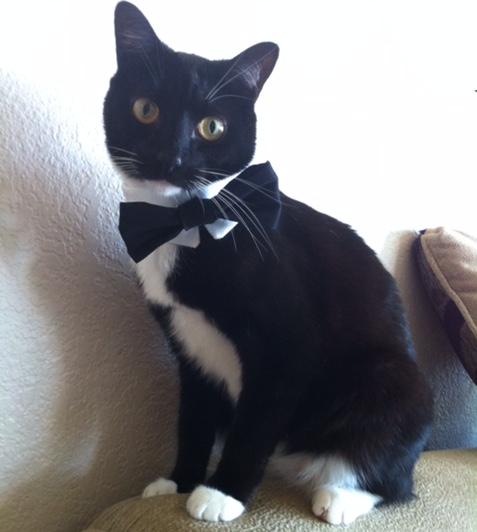 Black-cat-black-bow-tie.png