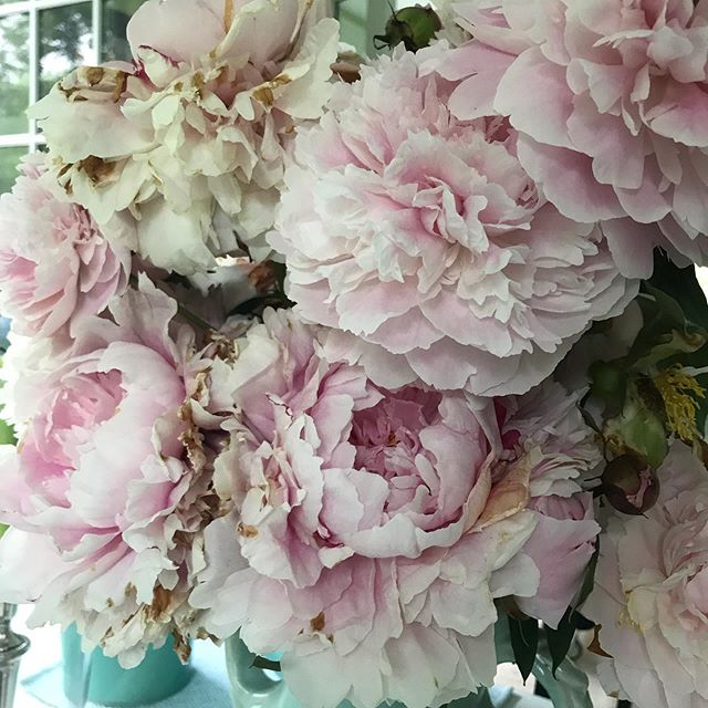 These are real ...... I must have at least 50 stems of peonies in my house right now.  #peonies #peonylove