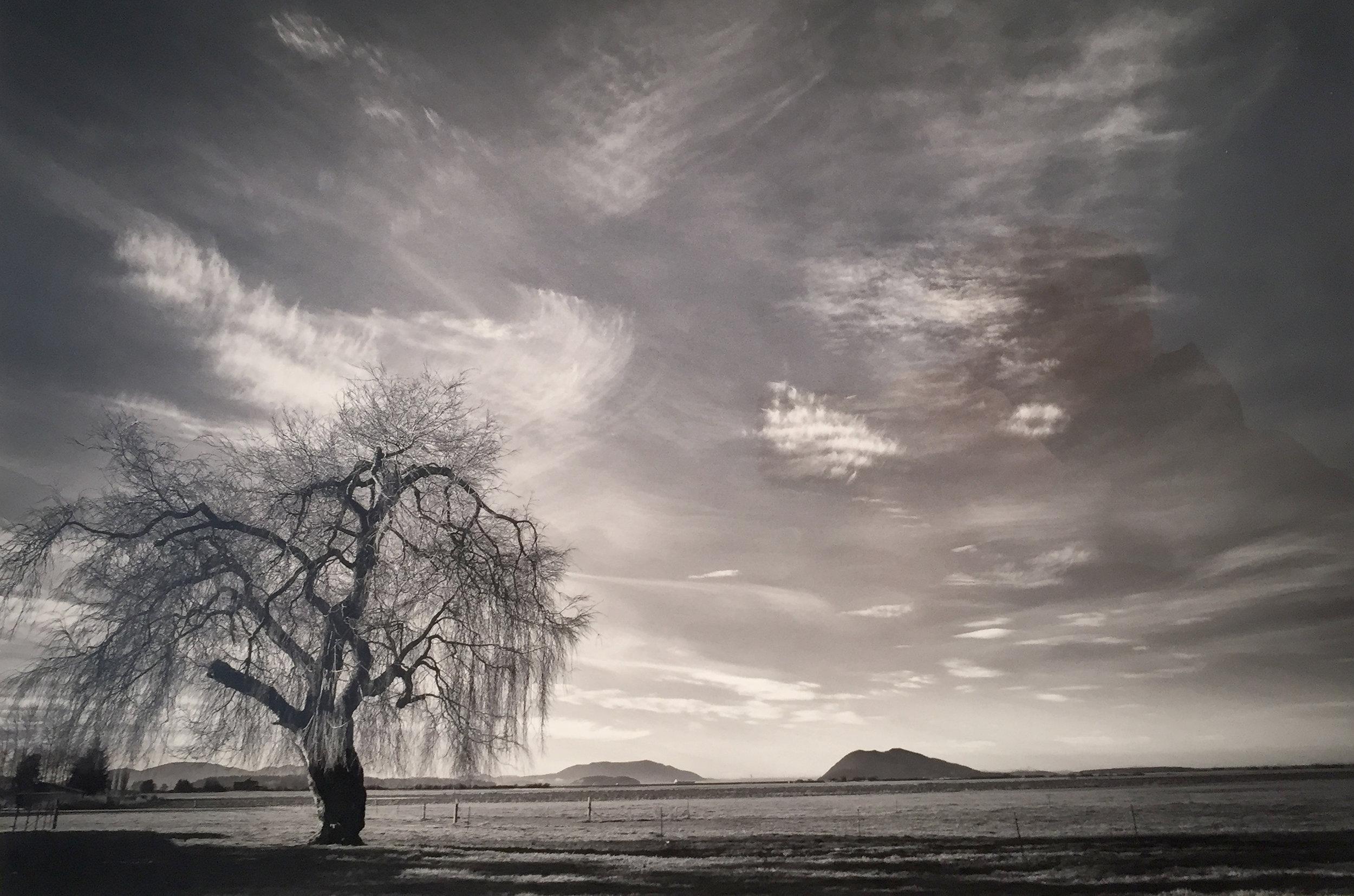 Tree + Landscape Edison, WA  Phil Eidenberg-Noppe copy.jpg