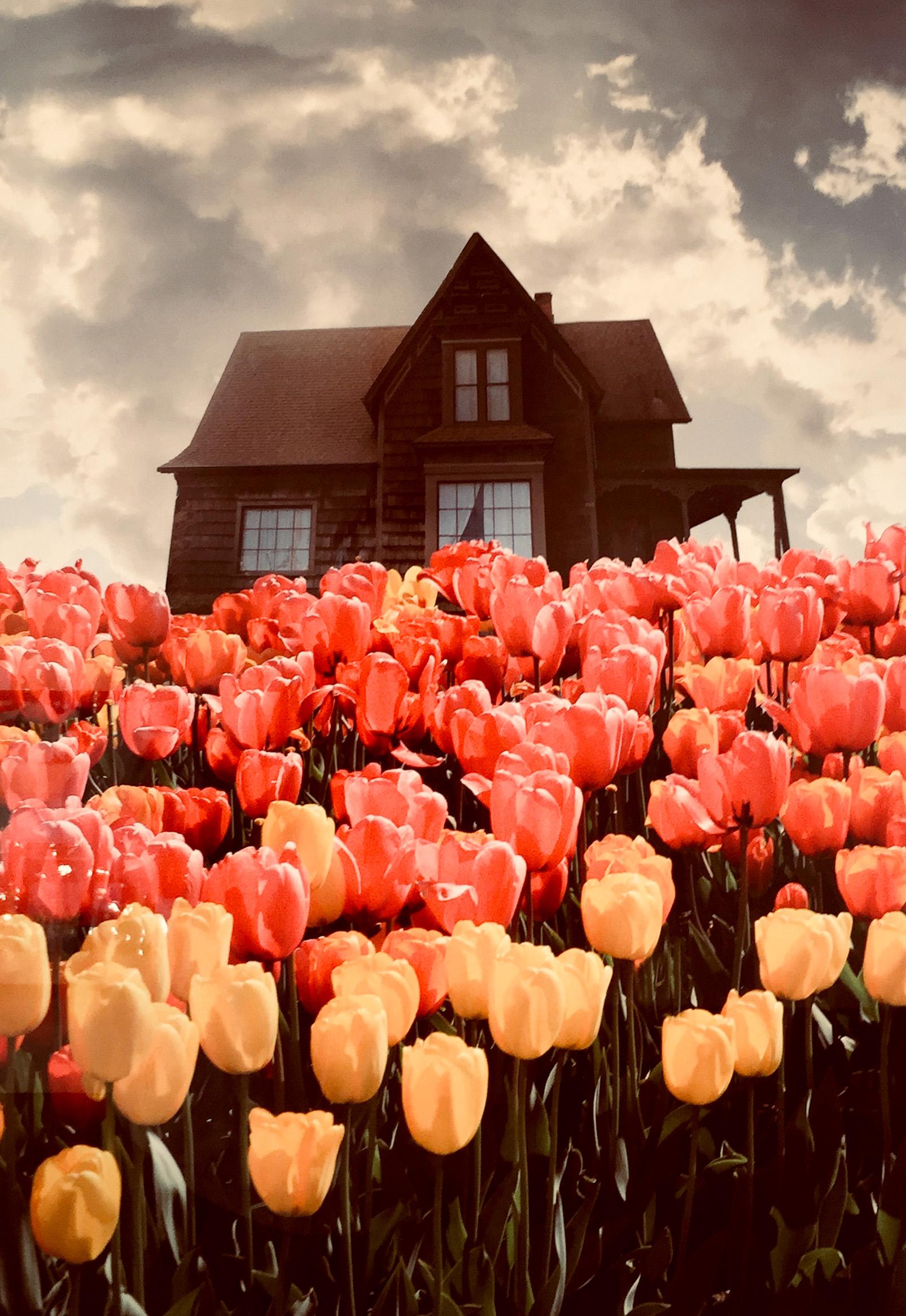 Tulips Steve Marts.jpg