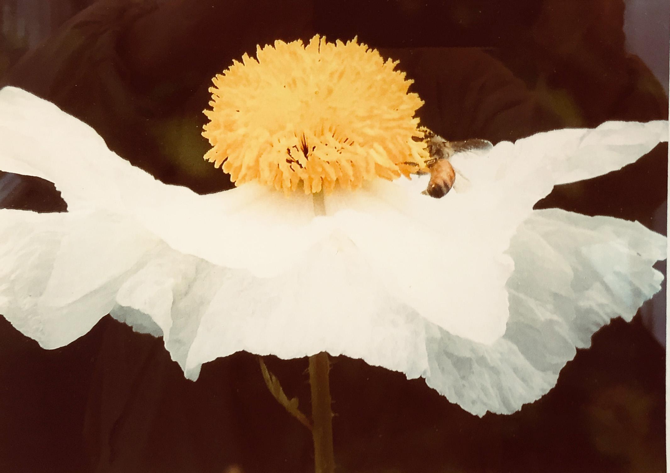 Too Bee-1 Color Joyce Burris.jpg