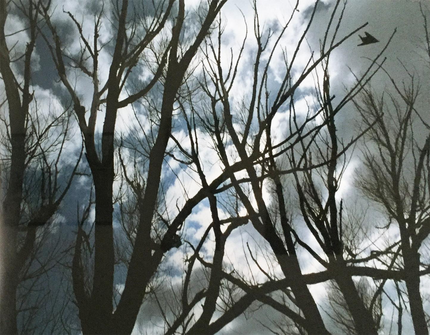 Black Trees   Steve Marts