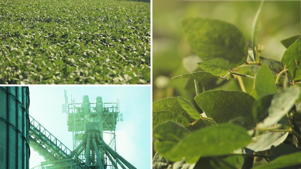 AFGAL_Monsanto_00002.jpg