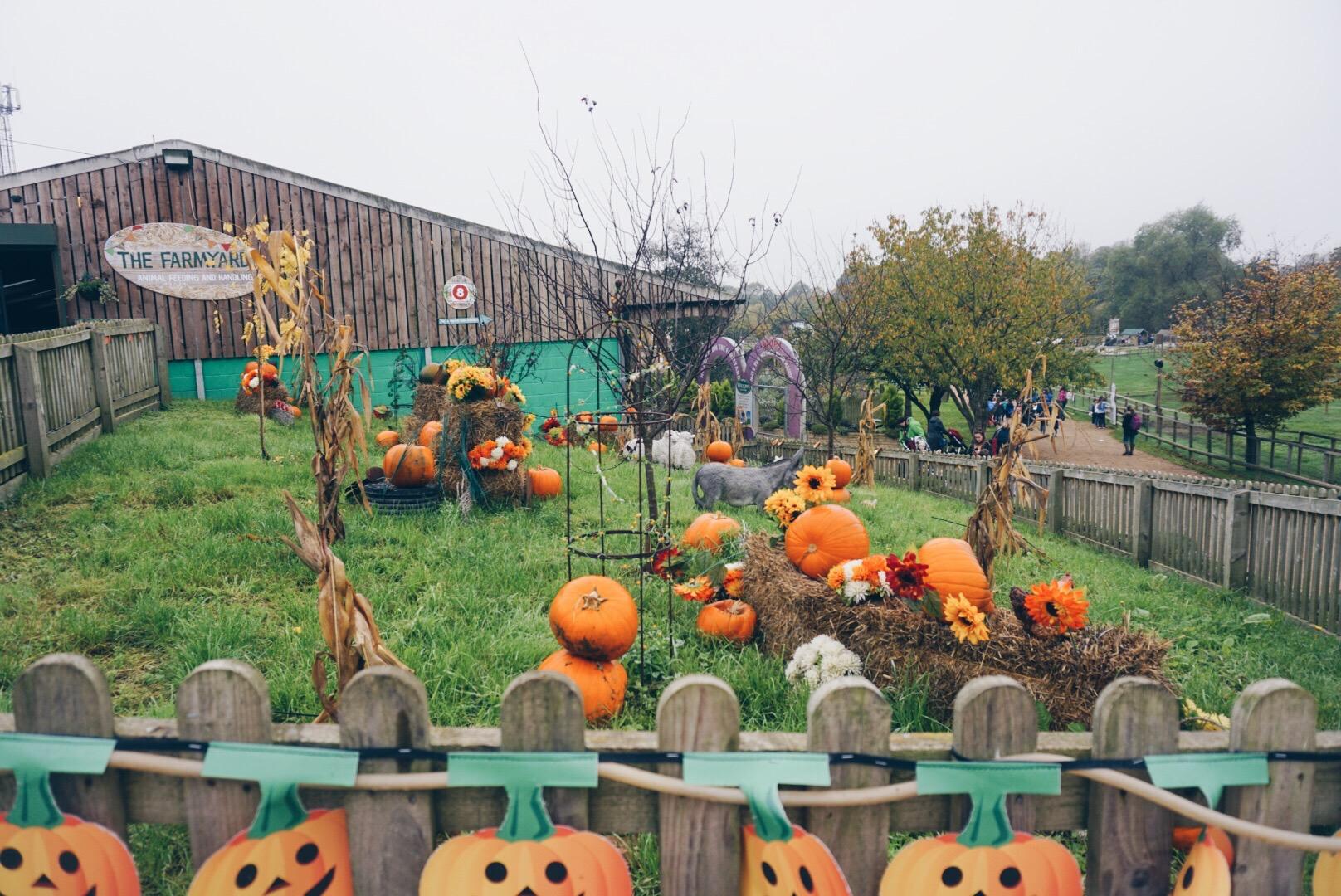 pumpkin event.jpg