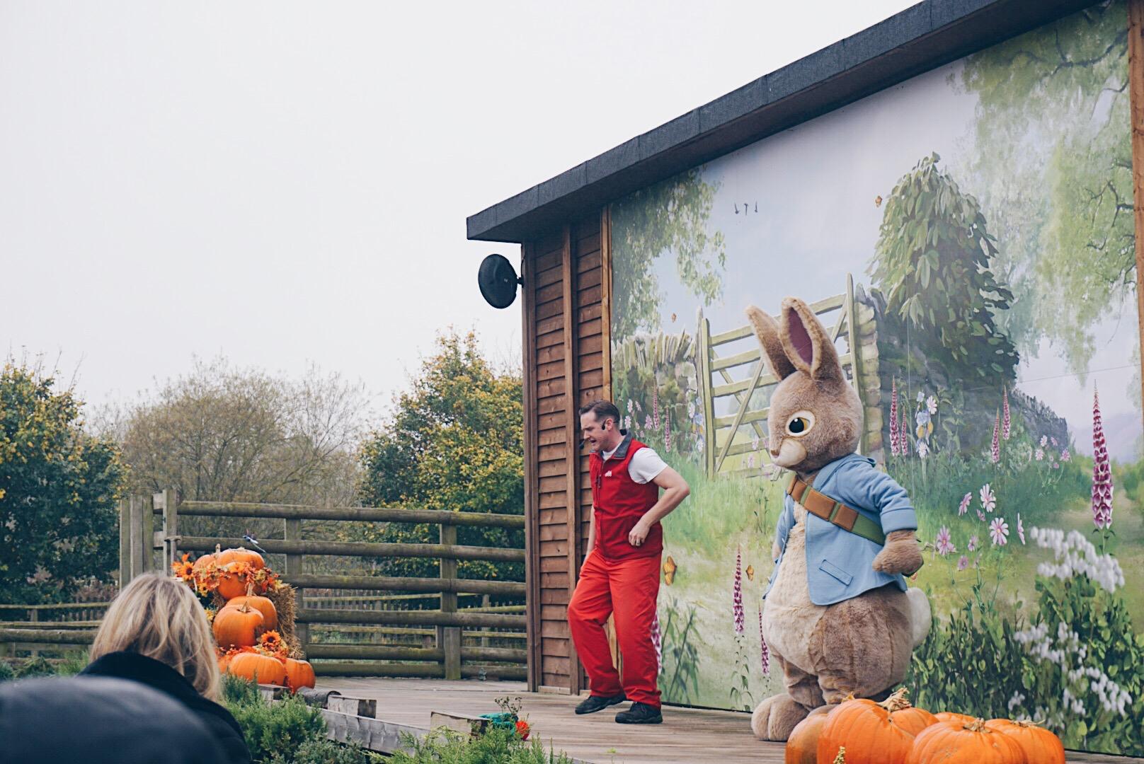 peter rabbit show.jpg