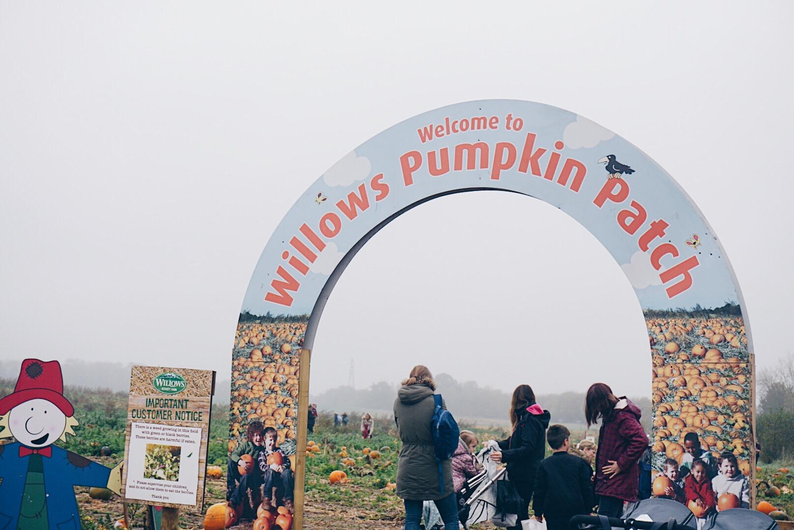 willows pumpkin patch.jpg