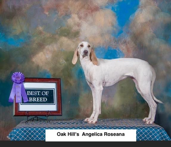 Angelica Roseana 2.jpg