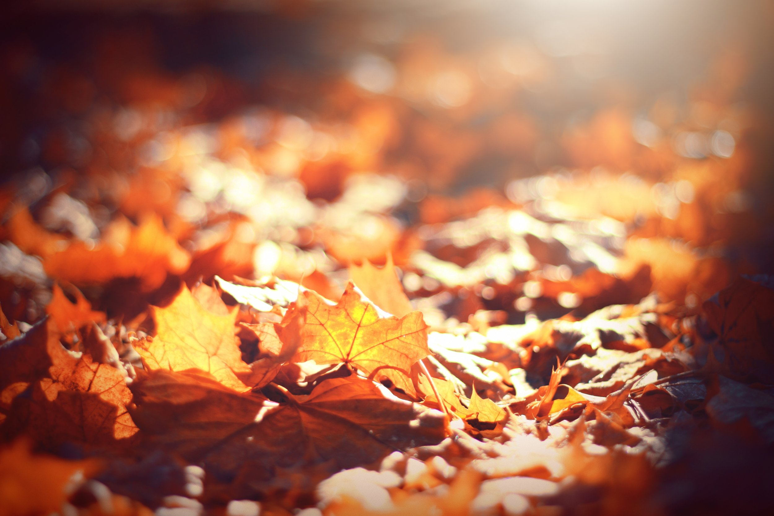 Fall-leaves-3.jpg