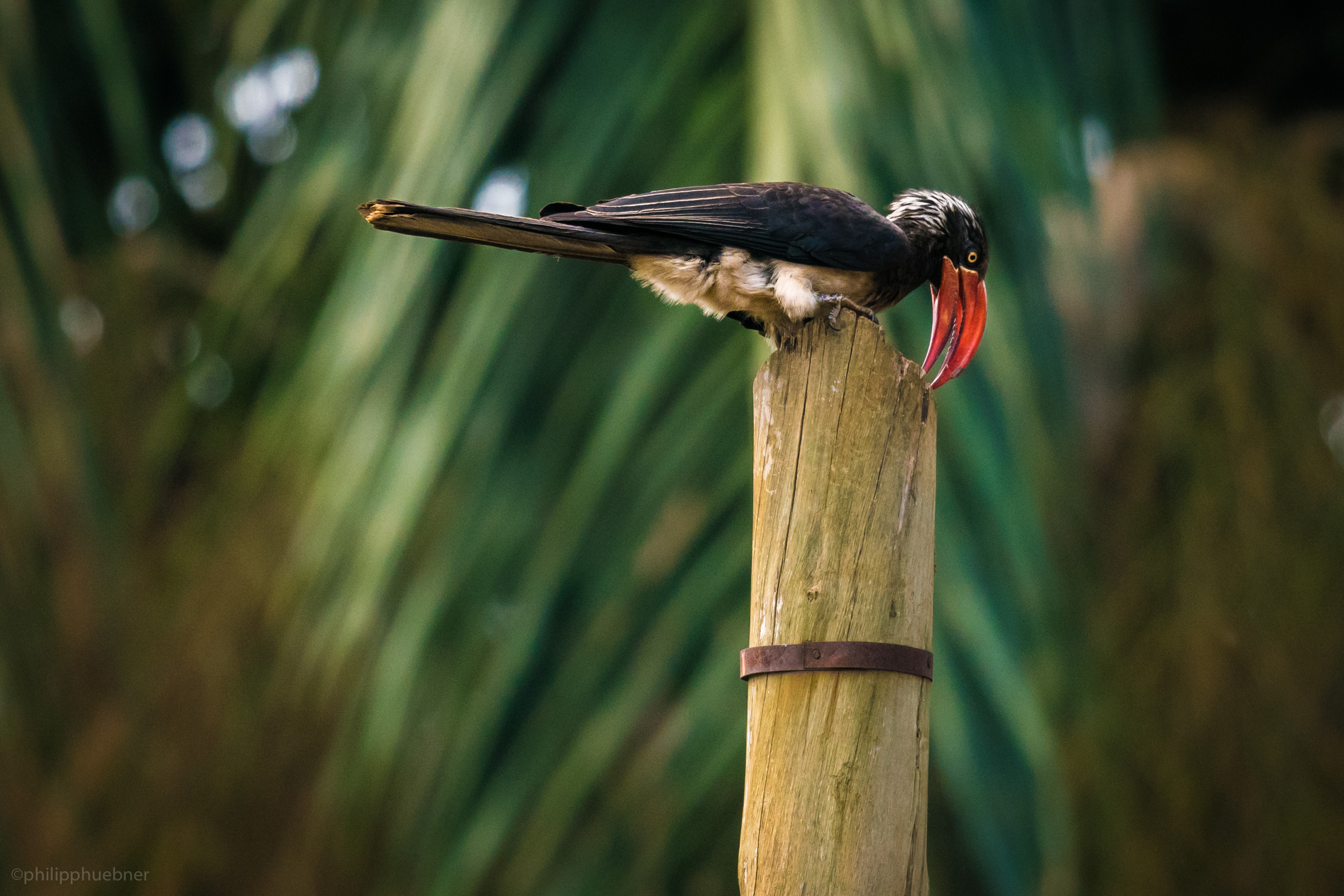 sharpening the beak