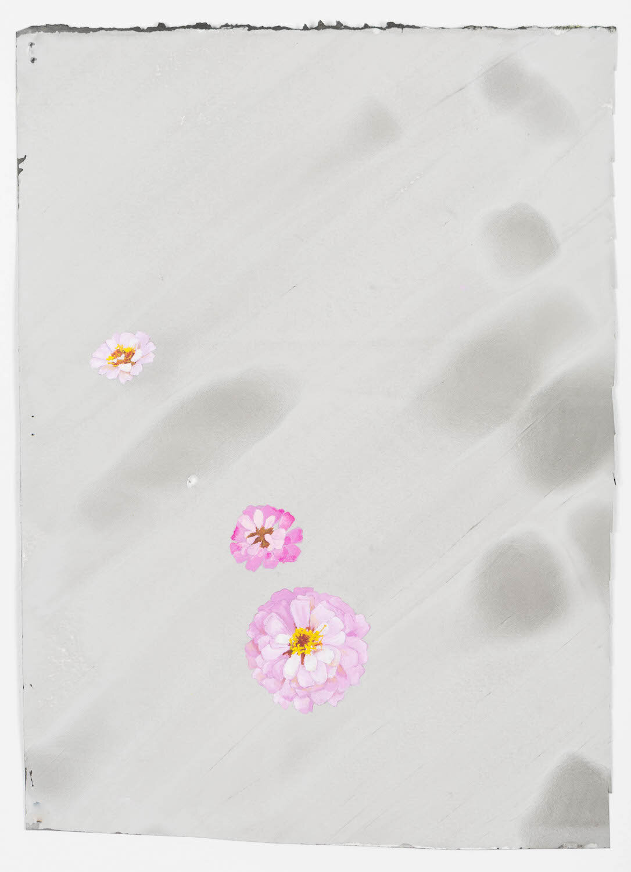 Olivia Schreiner.jpg