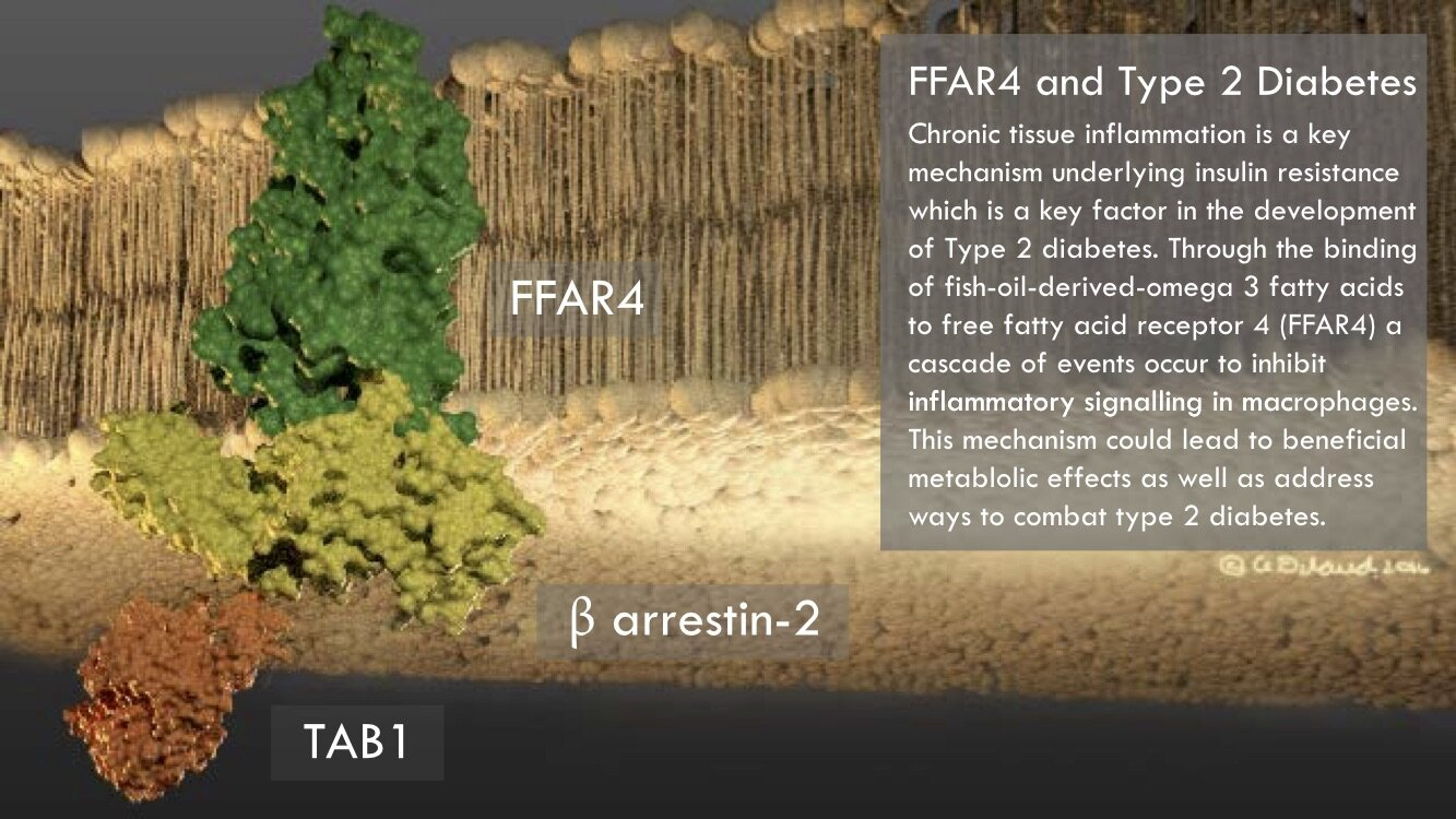 Figure 6.  FFAR4 and Type 2 Diabetes